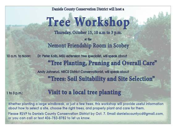 dccd-tree-workshop