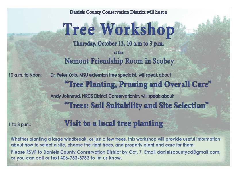 dccd-tree-workshop